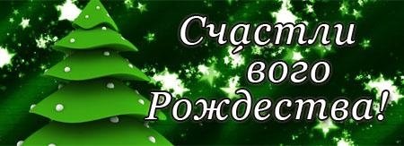 Grüne Tanne im Wald kündigt Weihnachten an