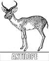 Malvorlage Antilope