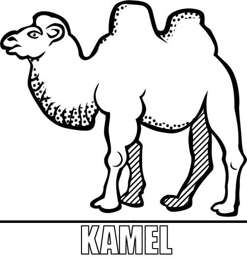 Charmant Kamel Kopf Malvorlagen Zeitgenössisch - Ideen färben ...