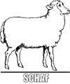 Malvorlage Schaf